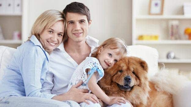 Wills & Trusts dog-young-family Direct Wills Wickford